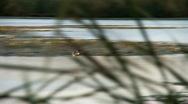 Duck in flight Stock Footage