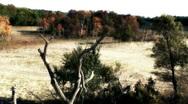 Beautiful autumn landscape in a sandy area of the Danube Delta  Stock Footage