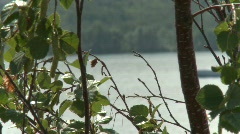 Fast boat on lake idles by, rack focus trees Stock Footage
