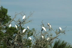 Tropical Birds In Tree Stock Footage