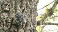 Wood Pecker on Tree Trunk HD Footage