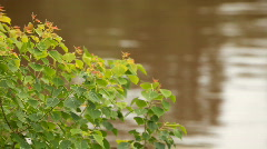 Riverside tree Stock Footage