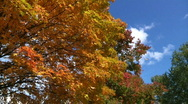 Stock Video Footage of Fall Foliage 1053