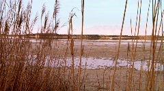 Phragmites (reeds) on the beach of the Dead sea Stock Footage