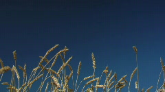 Harvesting campaign 6 - stock footage