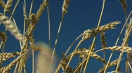 Harvesting campaign 7 Stock Footage