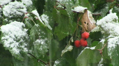first snow2 - stock footage