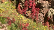Flowers In The Jemez Mountains Stock Footage