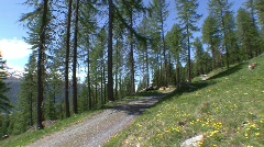 Forest Panorama Stock Footage