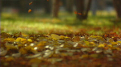 Autumn leaves fall. Slow motion - stock footage