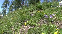 Mountain spring flowers Stock Footage