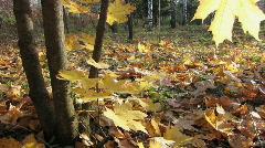 Autumn leafs 27 1 Stock Footage