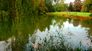 Lake, reed, shallow & park Stock Footage
