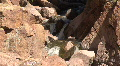 Flowing Stream In Canyon In The Jemez Mountains Footage