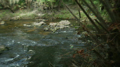Rapids Pan Stock Footage