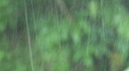 Rain with Mist Stock Footage