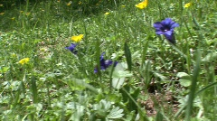 Close up pan spring flowers Stock Footage