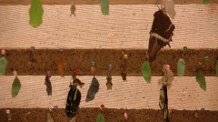 Butterfly pupae at a butterfly farm Stock Footage