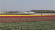 Stock Video Footage of Netherlands 18 Tulip Fields 04