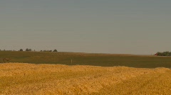 Agriculture, grain harvest combine, long shot through frame left to right Stock Footage
