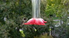 Hummingbird. - stock footage