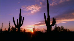 Saguaro Cactus Desert Sunset HD Stock Footage