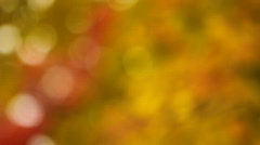 Brilliant Colors of Autumn Leaves Stock Footage