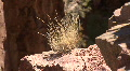 Grass / Bush The Jemez Mountains Footage