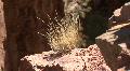 Grass / Bush The Jemez Mountains HD Footage