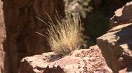 Grass / Bush The Jemez Mountains Stock Footage