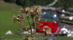 thistle in front of blurred ropeway - stock footage