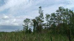 Everglades Tilt Stock Footage