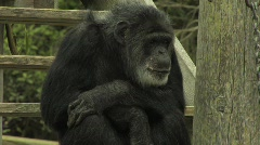Monkey 2 Stock Footage