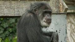 Monkey Stock Footage
