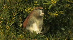 Primate 10 Stock Footage