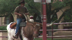 A quiet longhorn in Fort Worth Stock Footage