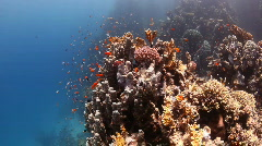 Beautiful coral reef Stock Footage