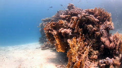 Coral block Stock Footage