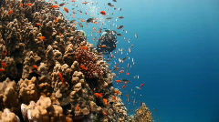 reef and diver - stock footage