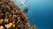 Reef and diver Stock Footage