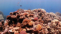 Reef from top Stock Footage