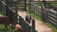 Texas cowboys Stock Footage