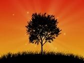 Magic tree at sunset Stock Footage