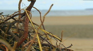 Stock Video Footage of focus pull from driftwood to sandy beach