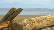 Stock Video Footage of focus pull driftwood to beach and ocean