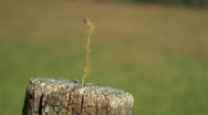 Fencepost with weed ECU Stock Footage