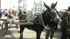 donkey cart - stock footage