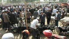 Kashgar animal market Stock Footage