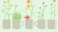 Mugs w Flower Explosion 1920x1080 Stock Footage