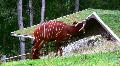 Bongo Antelope 1 HD Footage